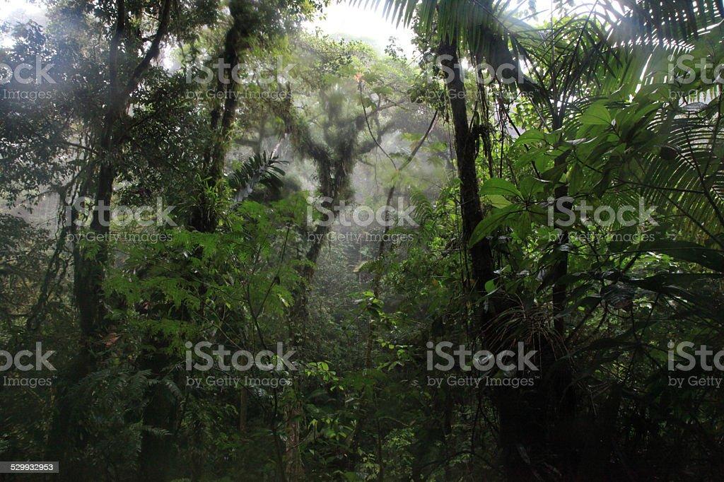 Selva de Costa rica stock photo