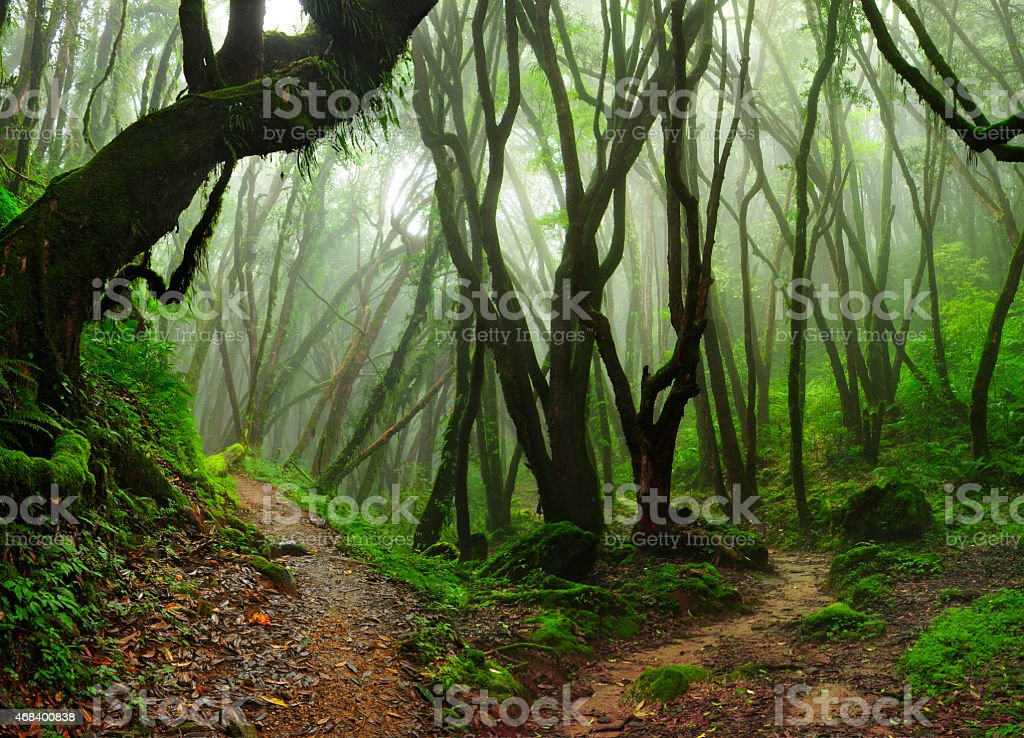Selva de Nepal stock photo
