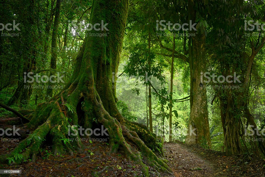 Selva tropical stock photo