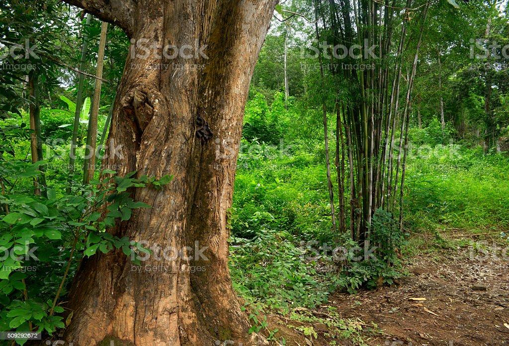 Selva tropical stock photo