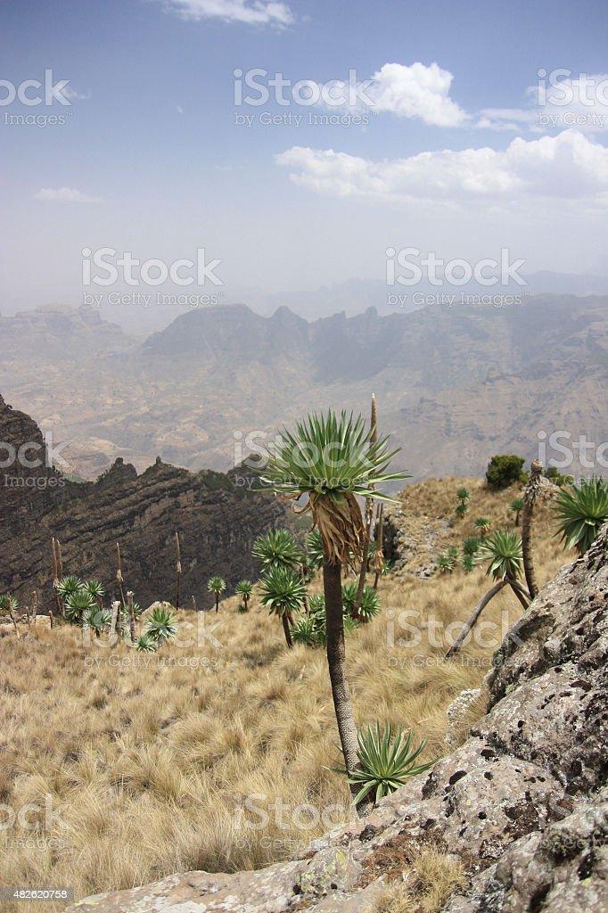 Semien Mountains royalty-free stock photo