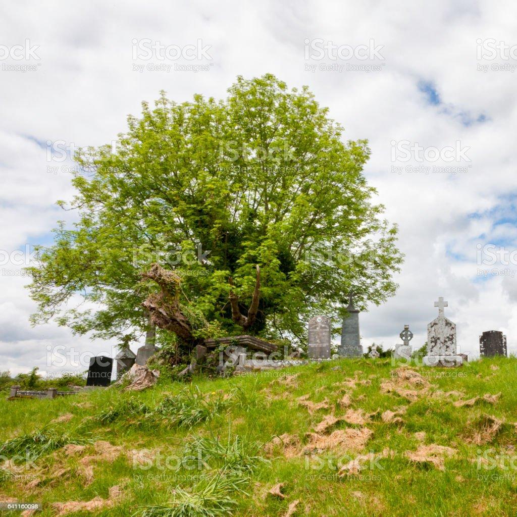 Seán na Sagart Tree at Ballintubber Abbey in County Mayo, Ireland. stock photo