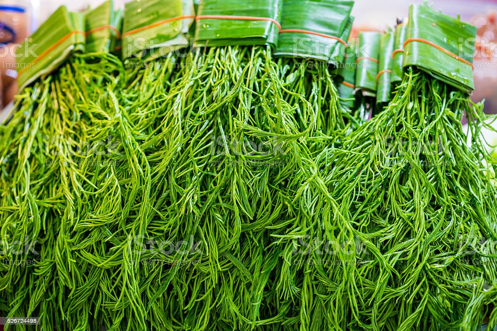 Senegalia pennata, Cha-om placed in thai market stock photo