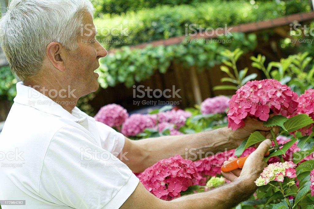 Senior adult in the garden stock photo