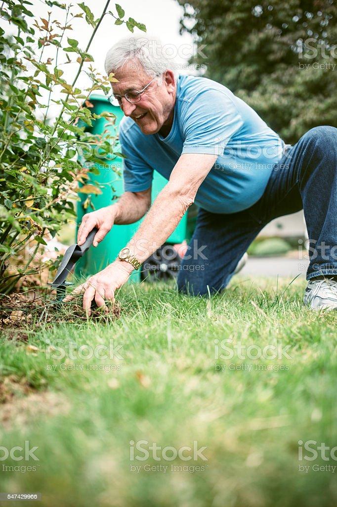 Senior Adult Man Doing Yardwork stock photo