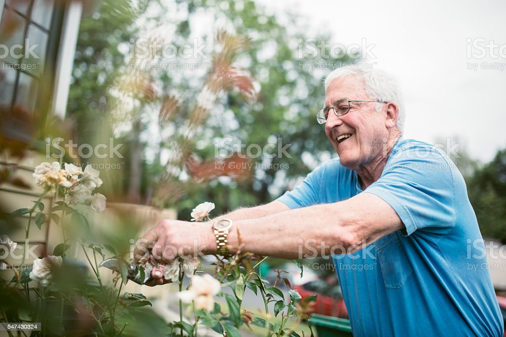Senior Adult Man Doing Yardwork stock photo