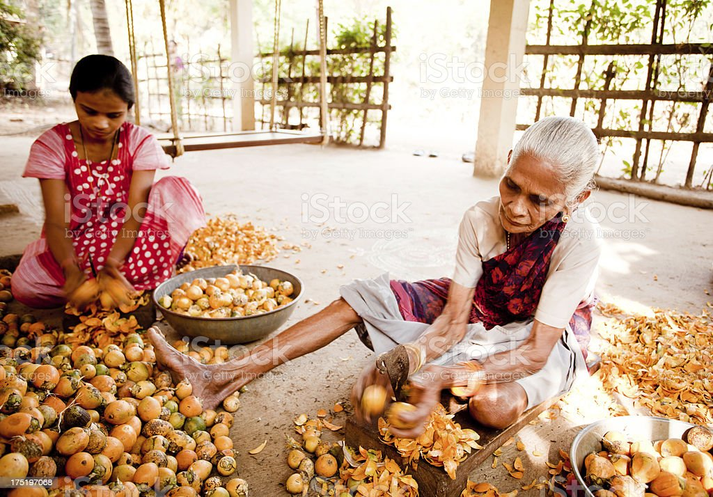 Senior and Young Indian Rural Women Peeling Betel Nut stock photo