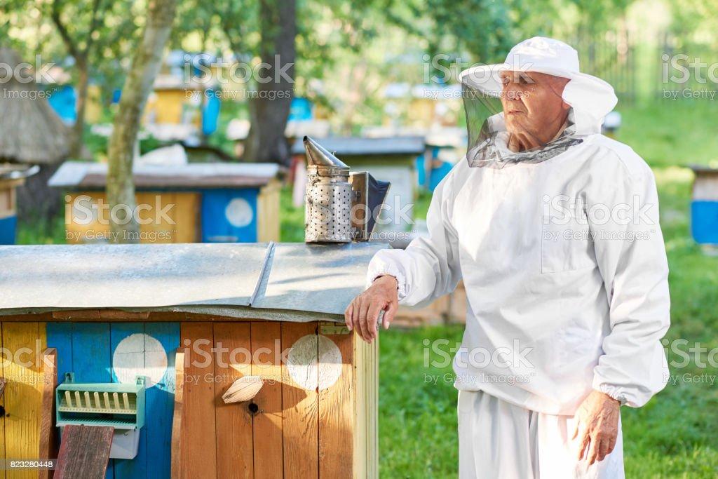 Senior beekeeper working at his apiary stock photo