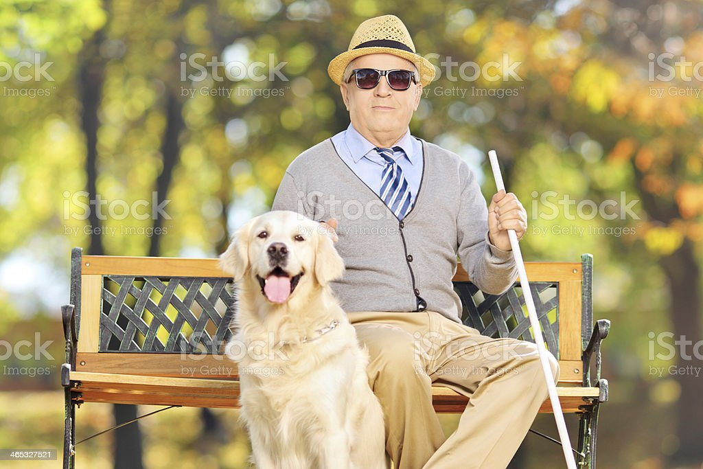 Senior blind gentleman sitting on a bench with his labrador stock photo