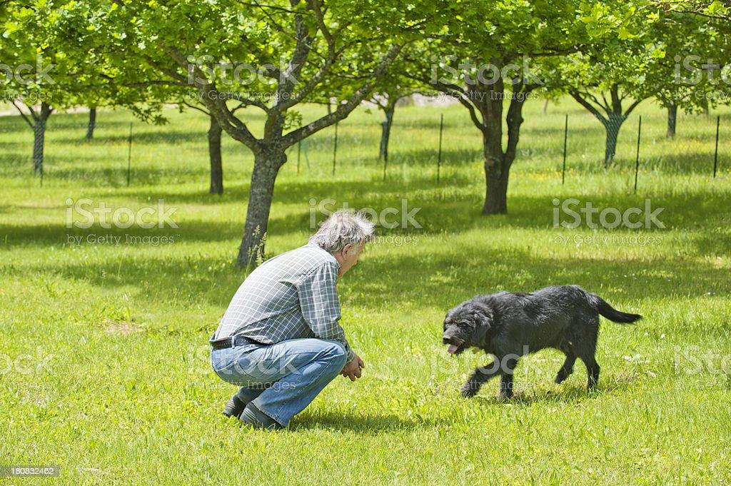 Senior calling dog to him stock photo