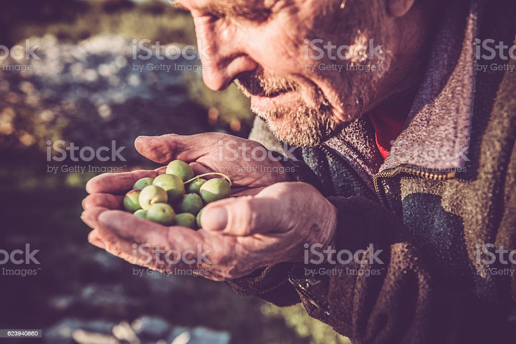 Senior Caucasian Man with Handful of Olives, Brac, Croatia, Europe stock photo