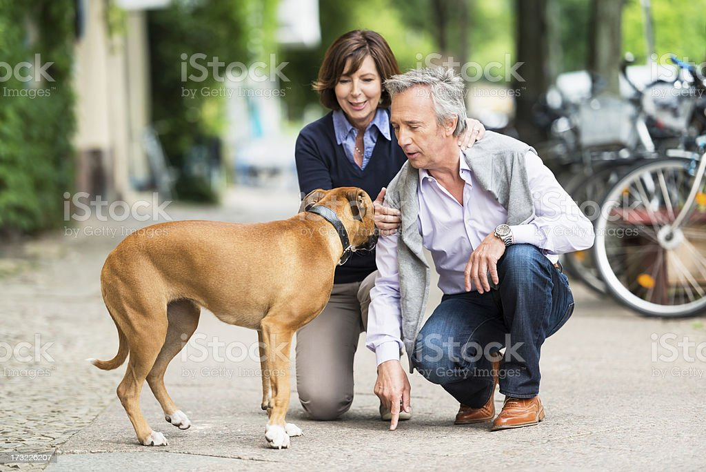 Senior Couple Educating Their Dog stock photo