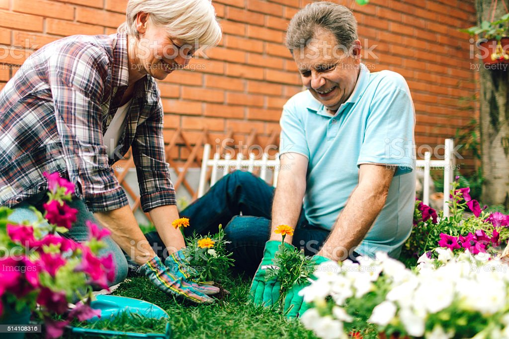 Senior Couple Gardening In Their Backyard Garden. stock photo
