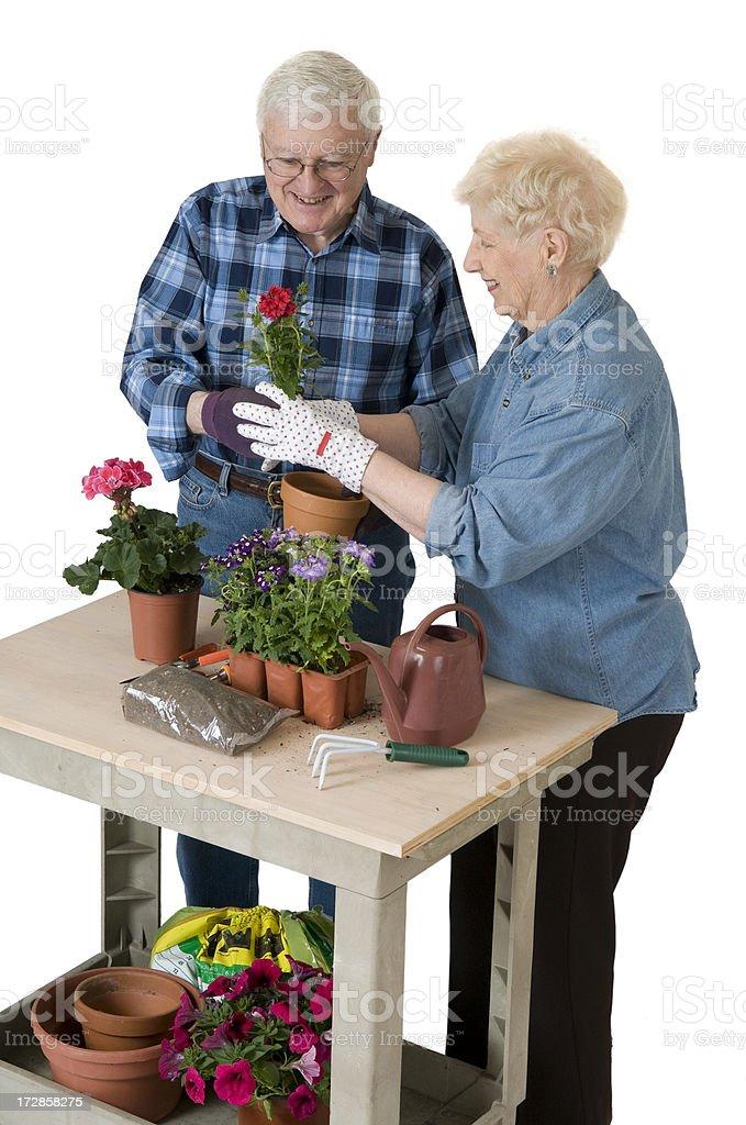 Senior Couple Gardening stock photo