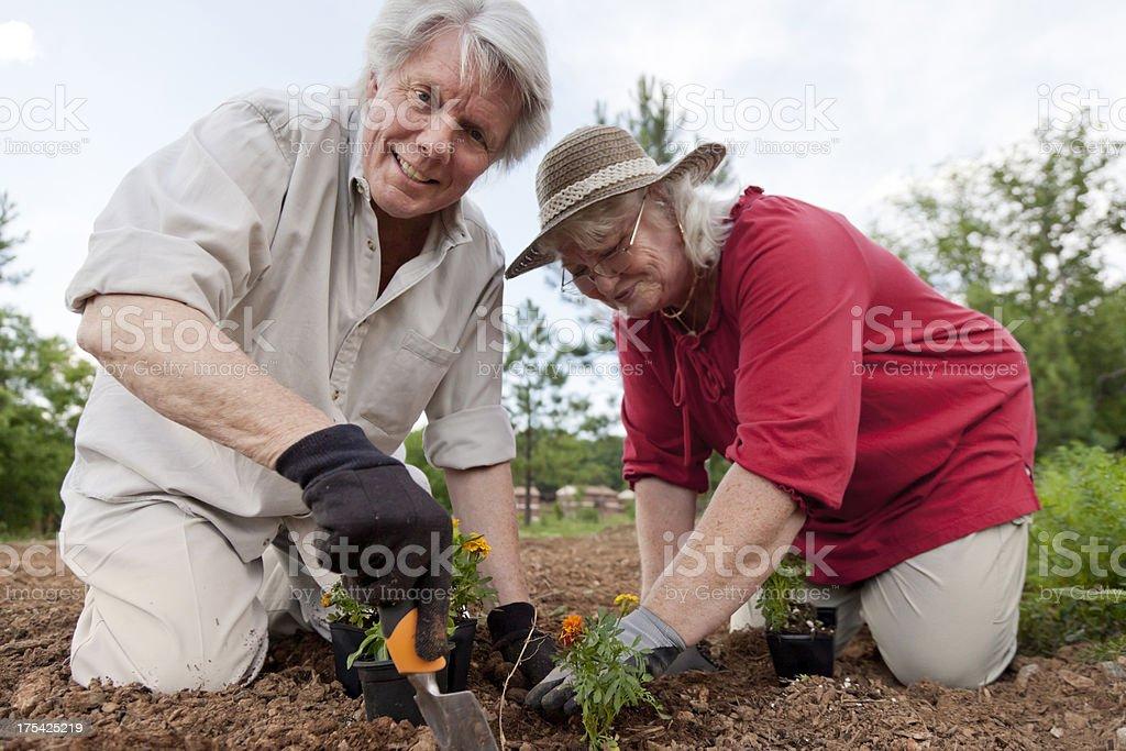 Senior Couple Gardening royalty-free stock photo
