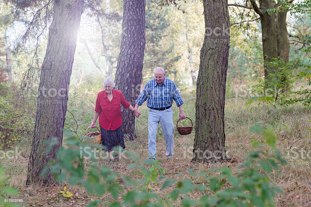 Senior couple picking mushrooms in the forest stock photo