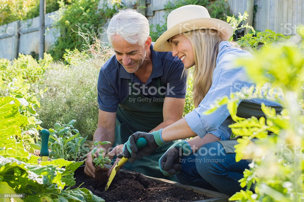 Senior couple planting stock photo