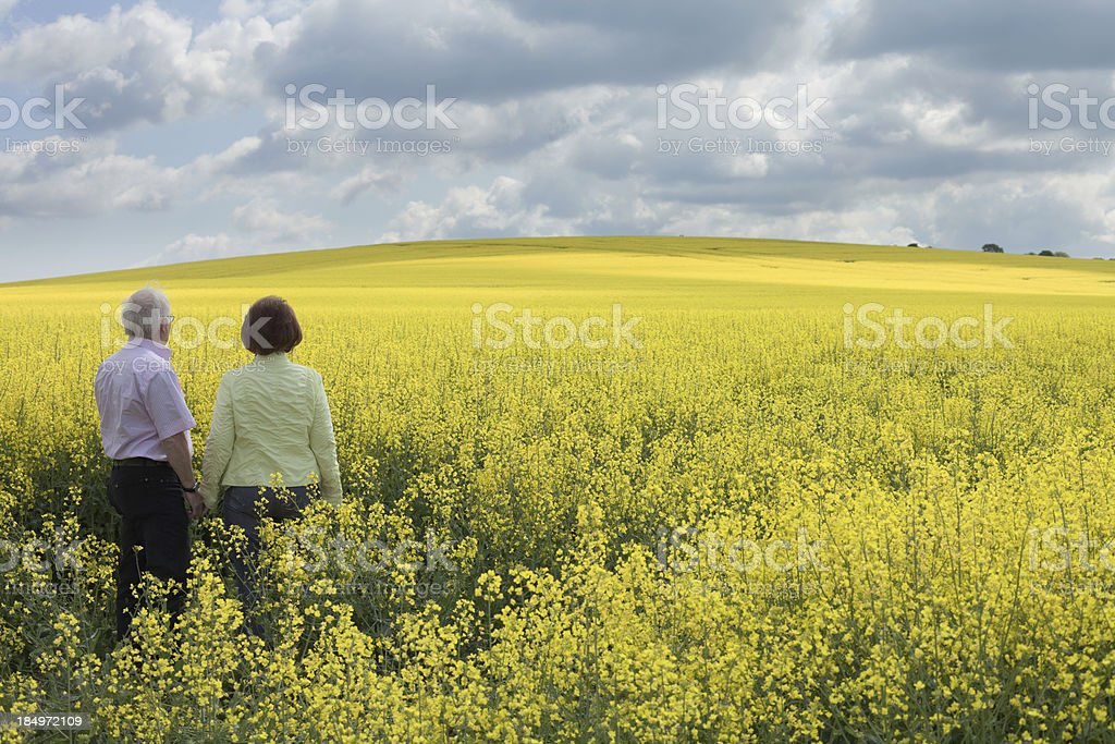 Senior couple standing in blooming canola field royalty-free stock photo