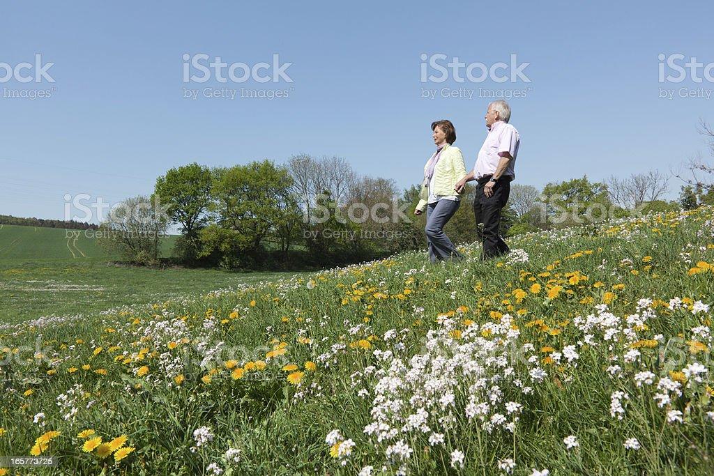 Senior couple walking on blooming meadow (XXXL) royalty-free stock photo