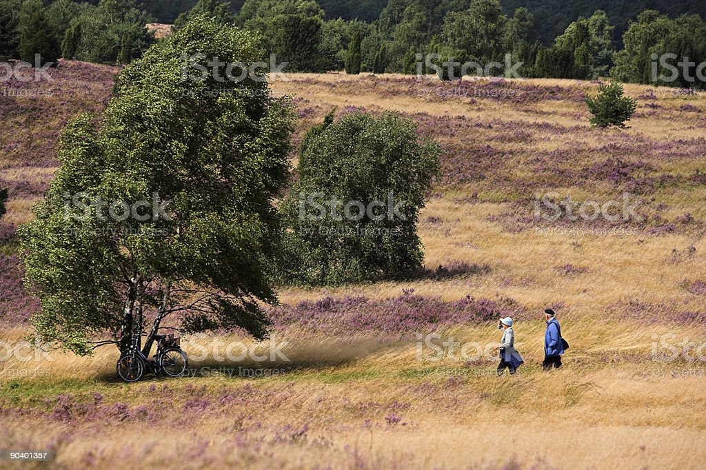 Senior couple walking on heathland with birch trees (XXL) royalty-free stock photo