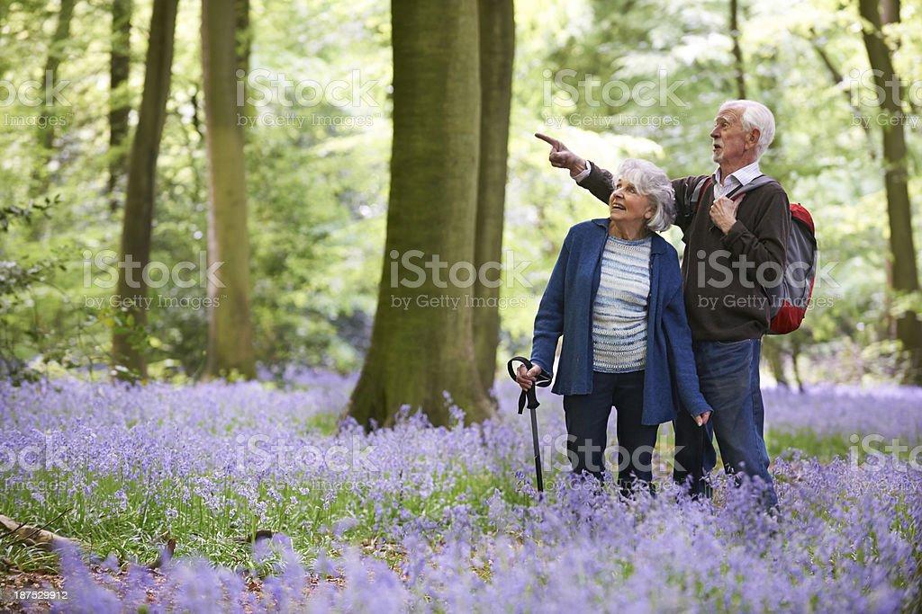 Senior Couple Walking Through Bluebell Wood stock photo