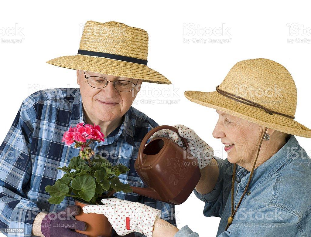 Senior Couple with Geranium stock photo