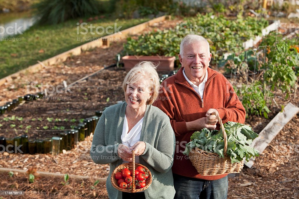 Senior couple with vegetables harvested from garden royalty-free stock photo