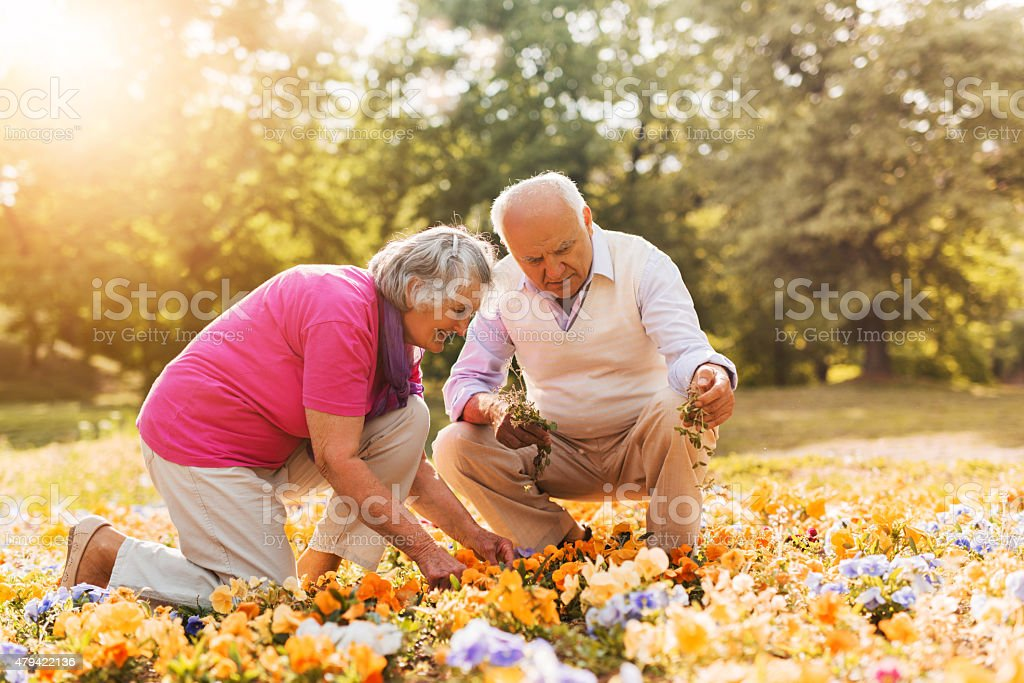 Senior couple working together in a garden. stock photo