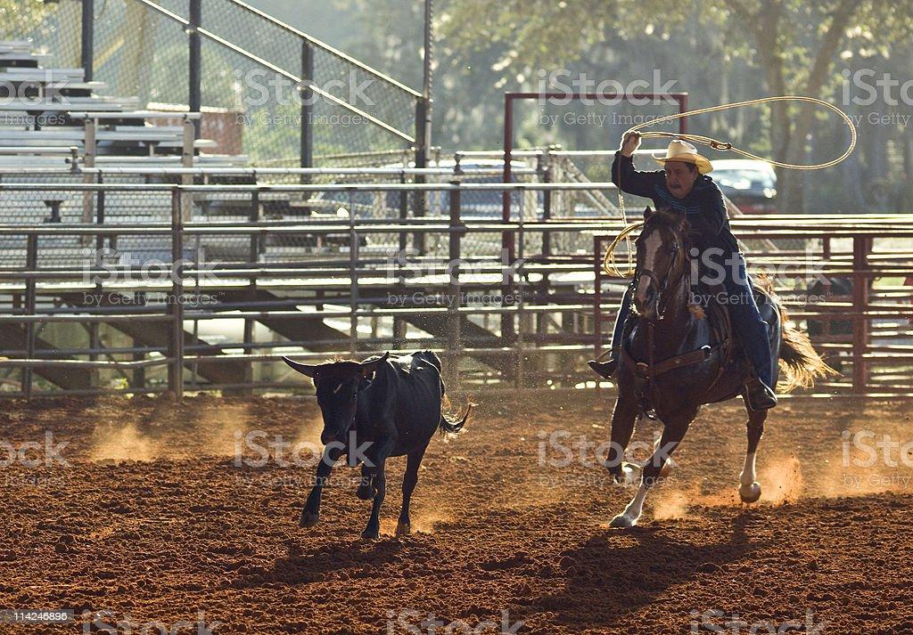Senior cowboy roping the calf royalty-free stock photo