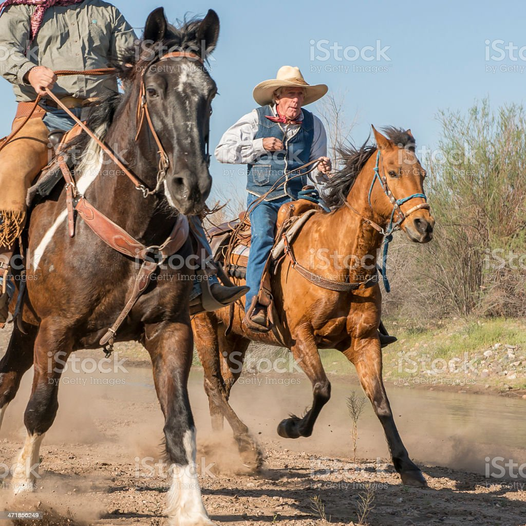 Senior cowboy running horse stock photo