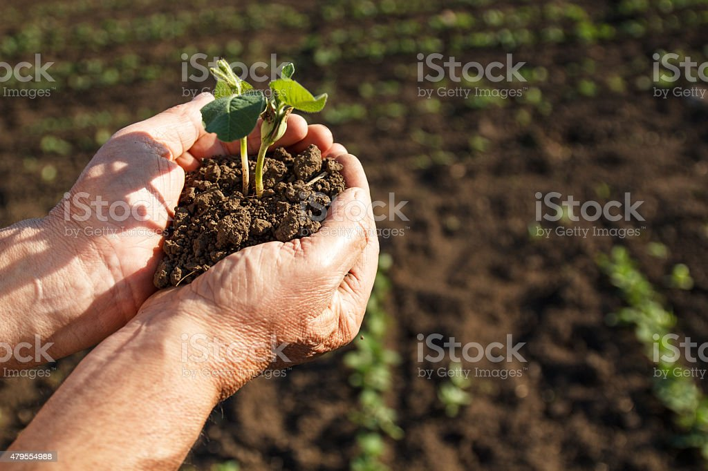 Senior farmer holding a green young plant stock photo