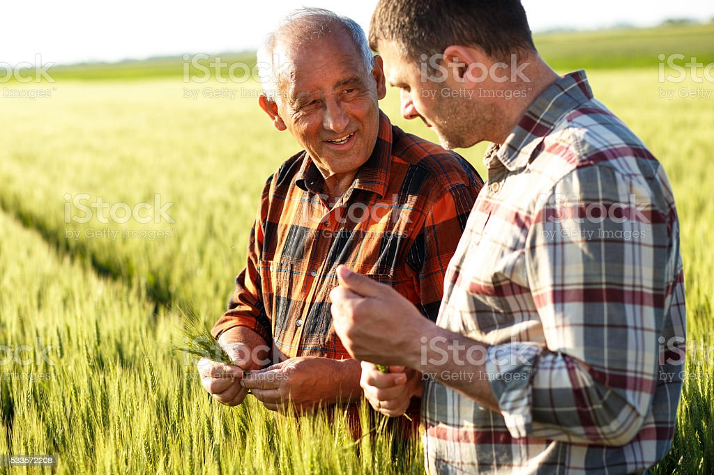 Senior farmer in a field examining crop stock photo