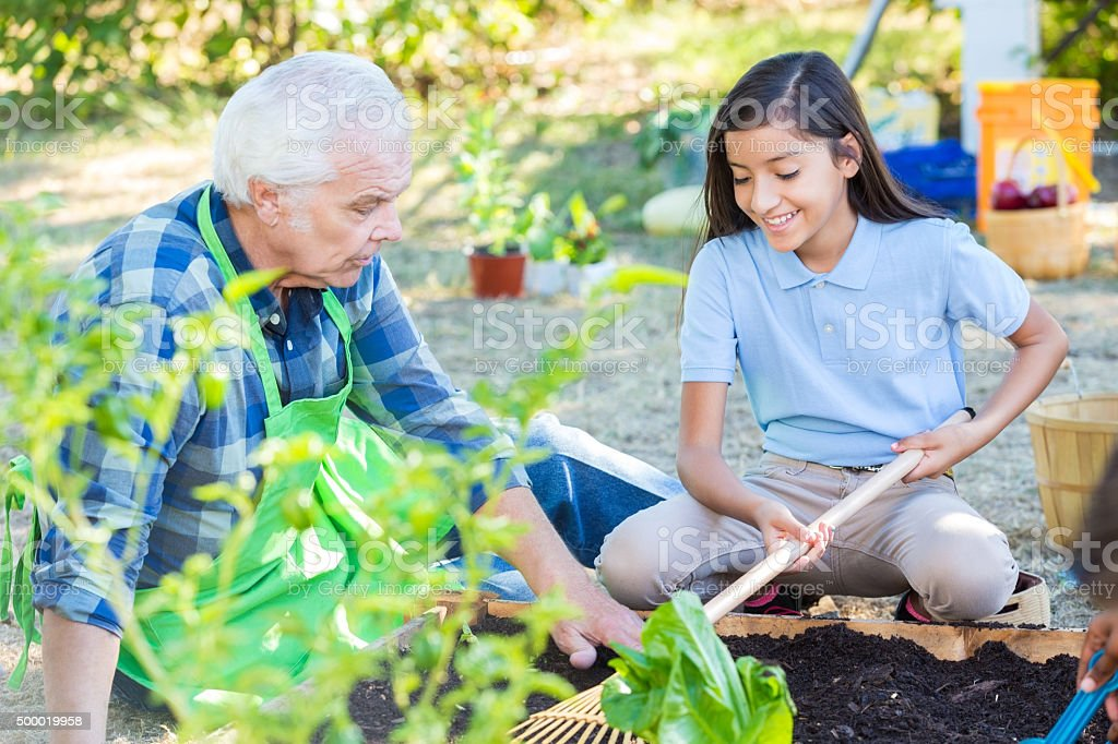 Senior farmer teaching elementary students about gardening during field trip stock photo