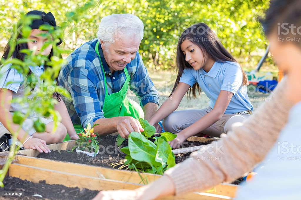 Senior farmer teaching private school students about gardening stock photo