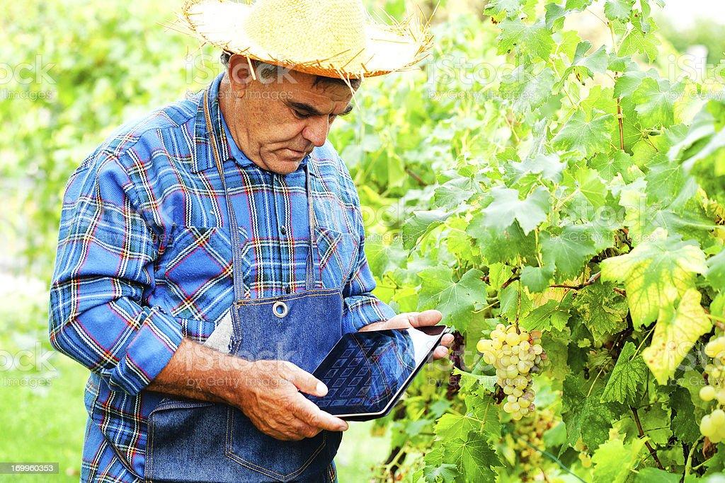 Senior Farmer using Tablet stock photo