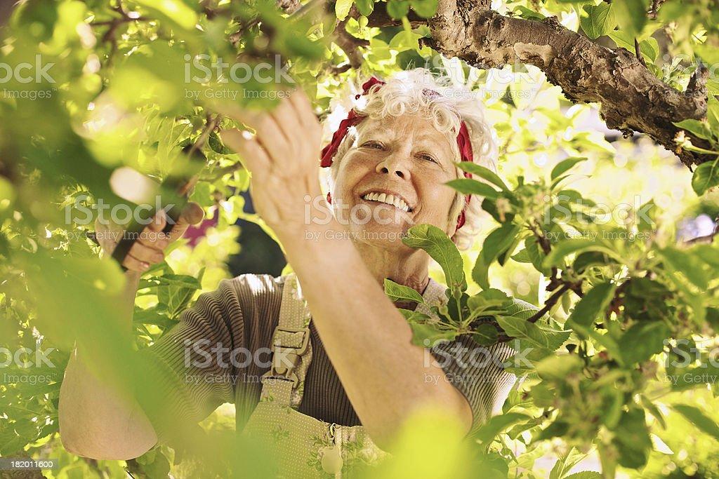 Senior female gardener working in her farm smiling stock photo
