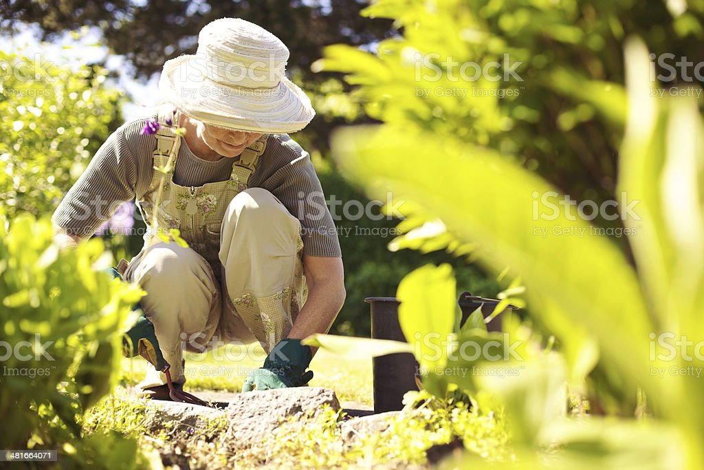 Senior female gardener working in her garden stock photo