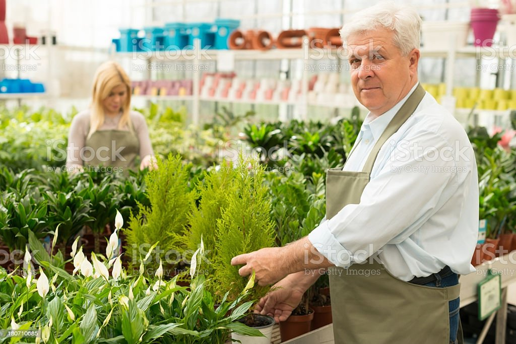 Senior florist working in greenhouse royalty-free stock photo