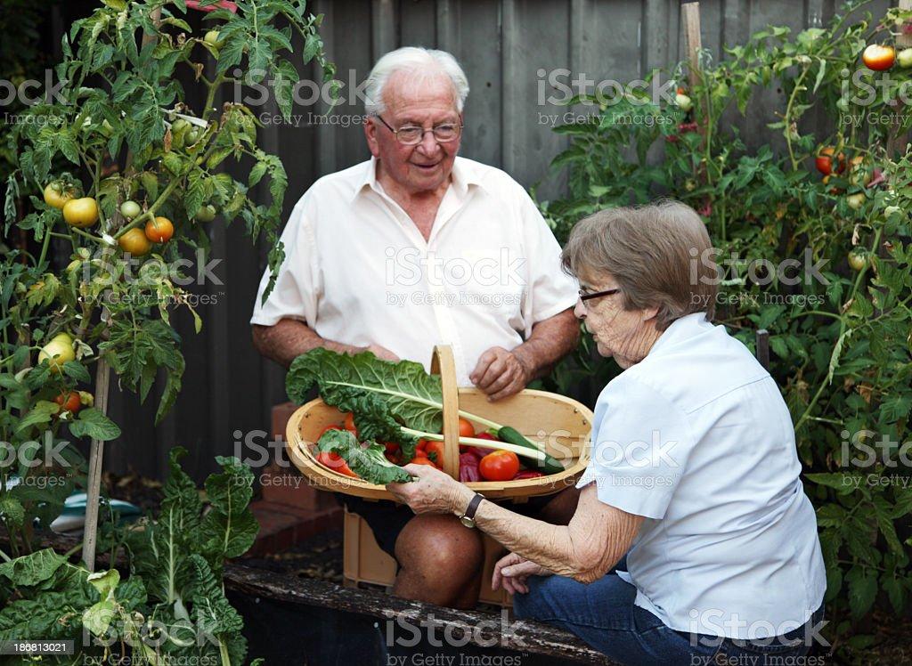 Senior gardening stock photo