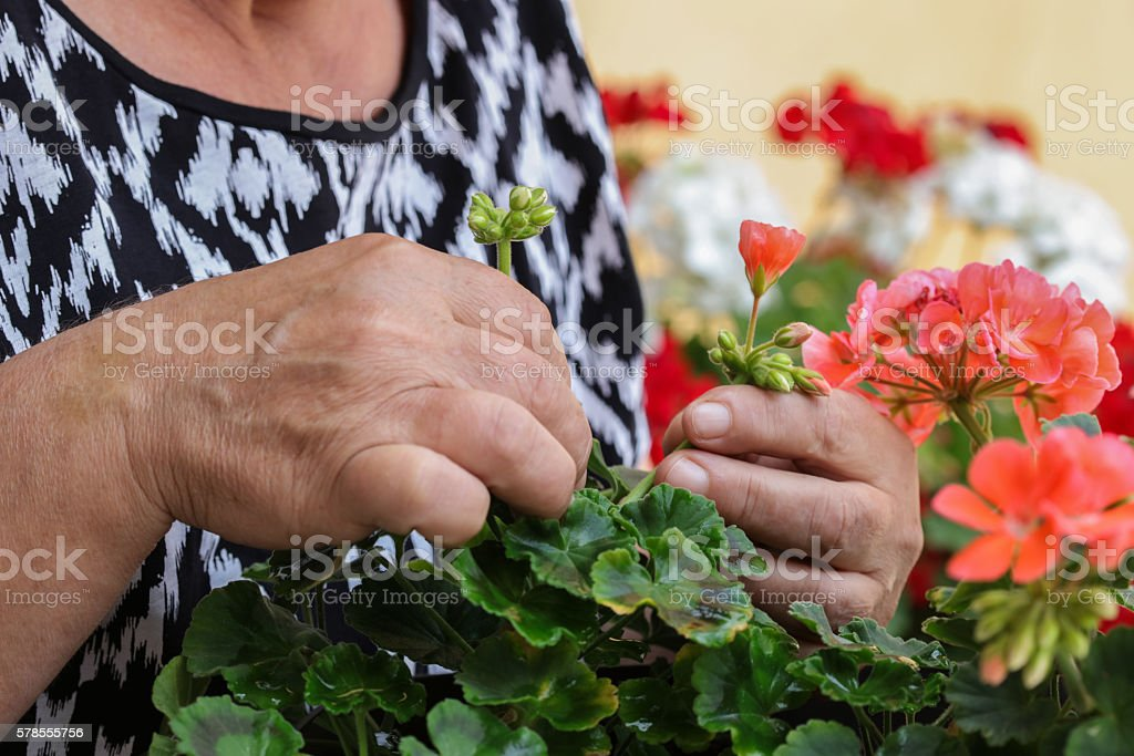 Senior hands stock photo