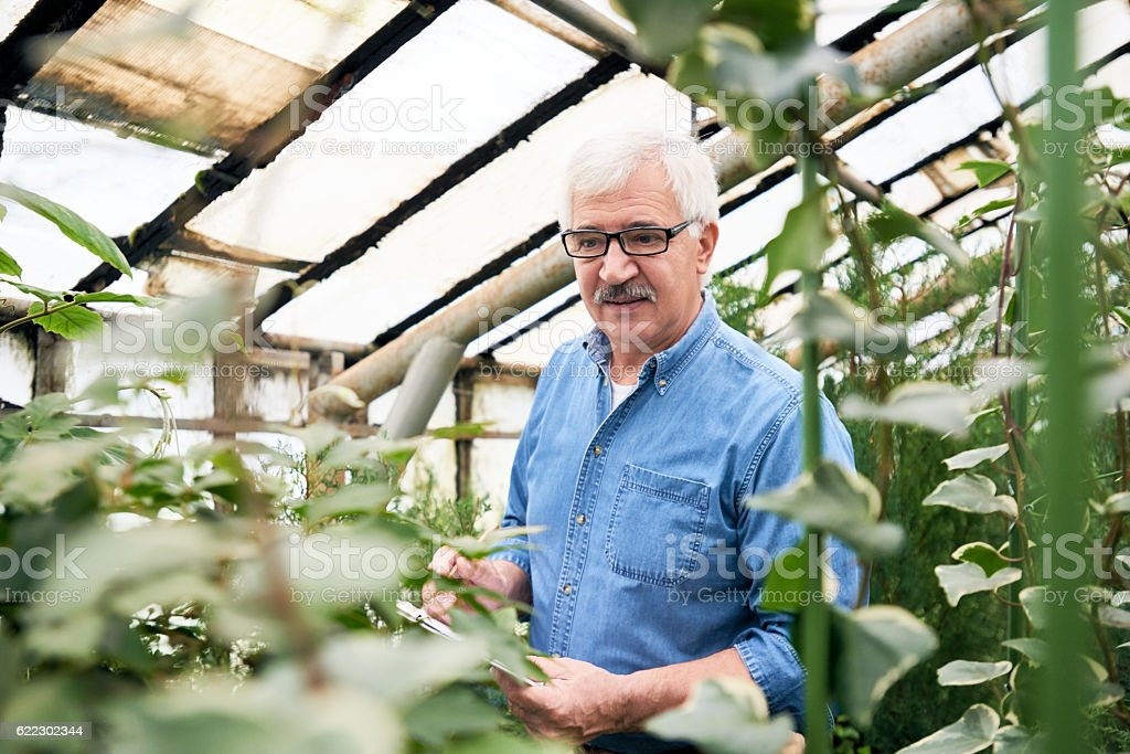 Senior holding botanic research stock photo