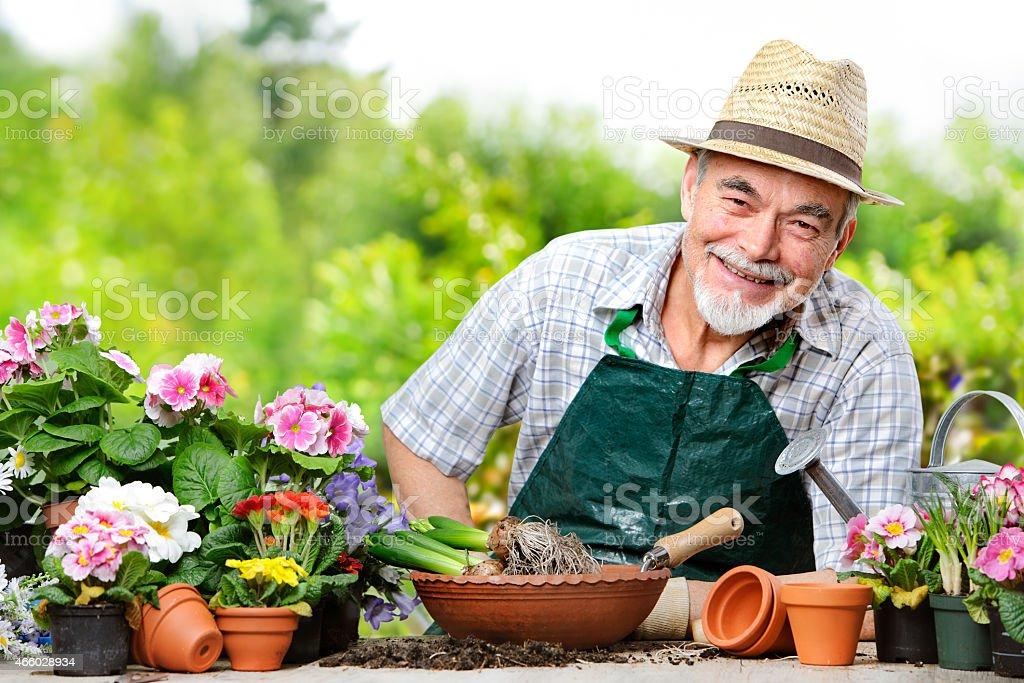 Senior in the flower garden stock photo