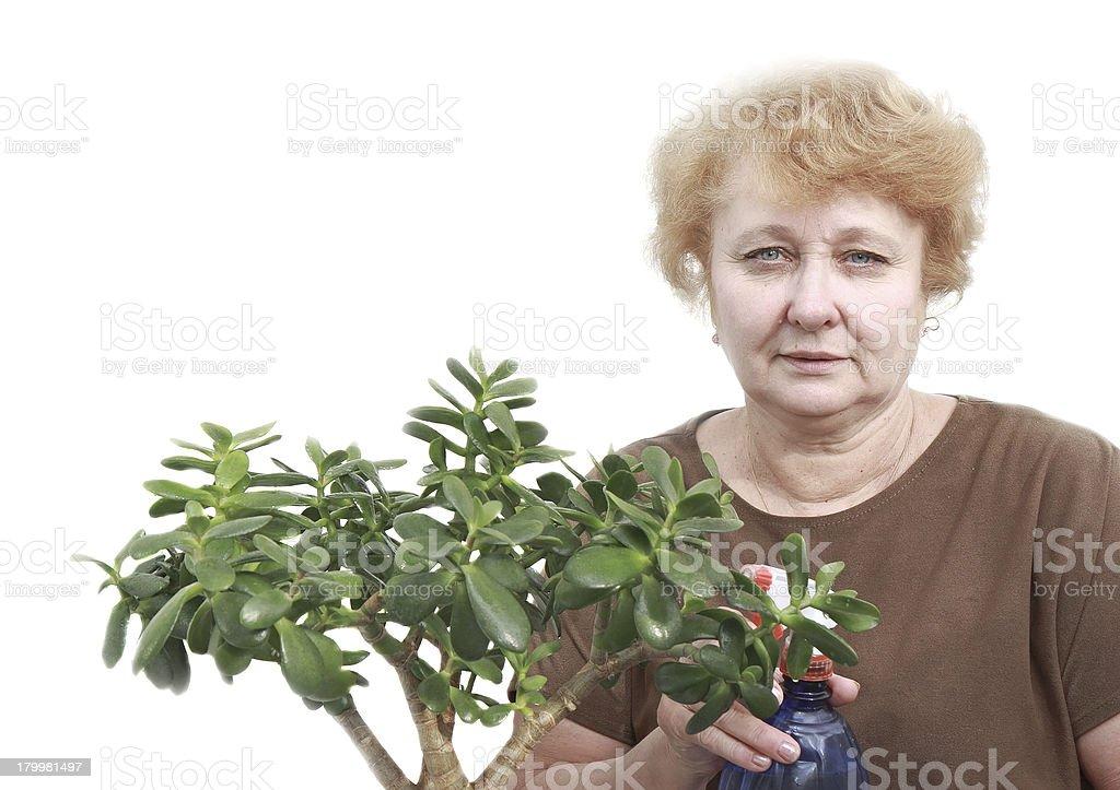 Senior lady wipes foliage on a plant. Isolated royalty-free stock photo