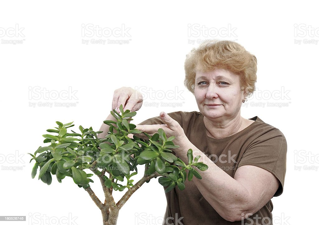 Senior lady wipes foliage on a plant. Isolated royalty-free stock photo