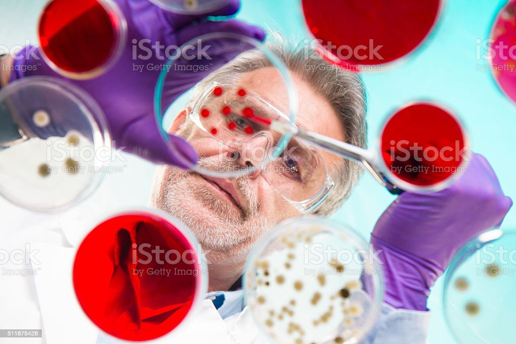Senior life science researcher grafting bacteria. stock photo