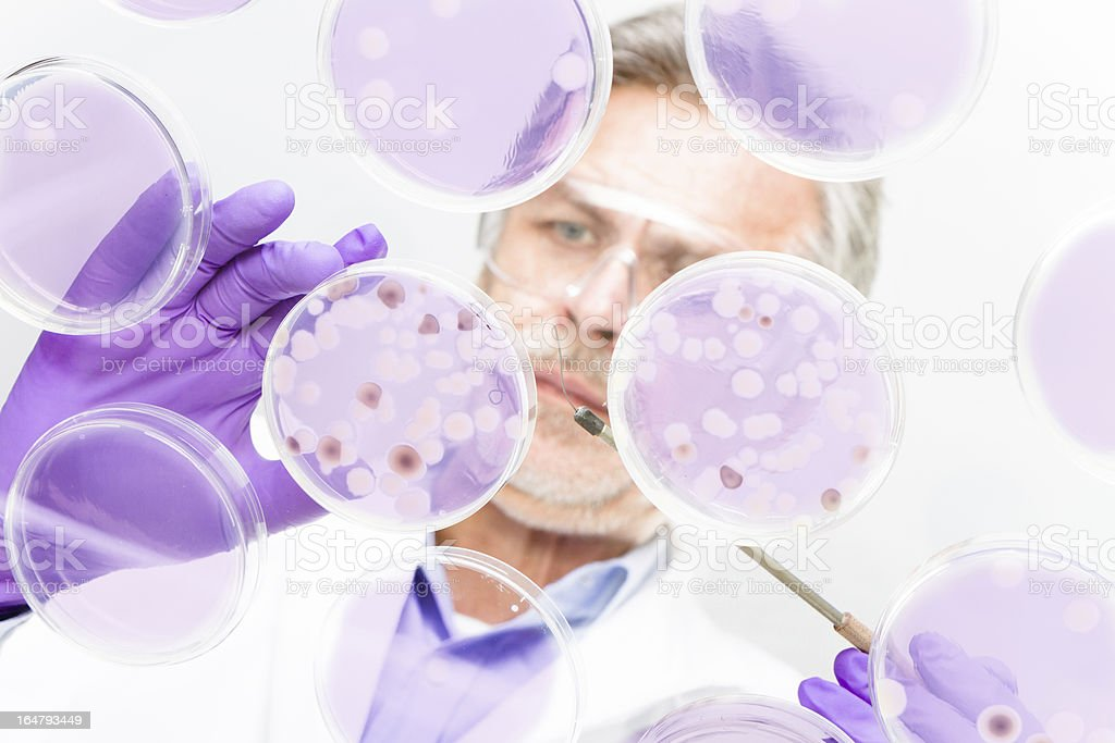 Senior life science researcher studying a petri dish stock photo