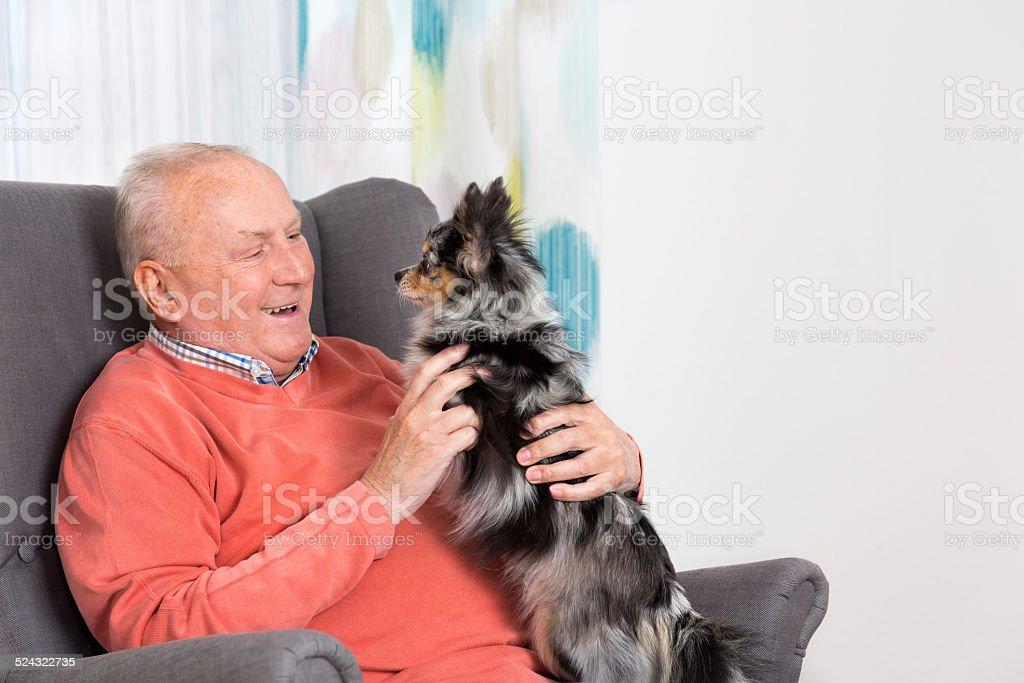 Senior man and his Chihuahua at home stock photo