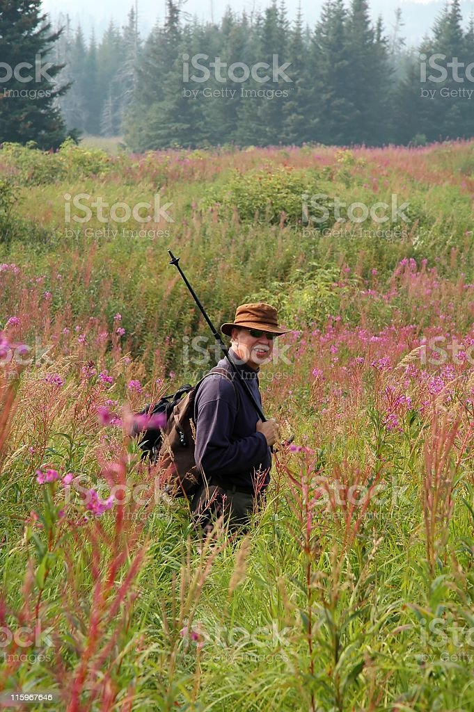 Senior man exploring  nature through  field with fireweed,Home,Alaska royalty-free stock photo