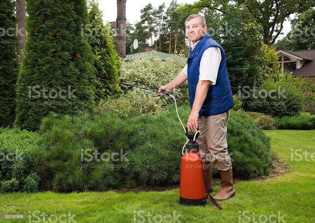 Senior man florist working in the garden royalty-free stock photo