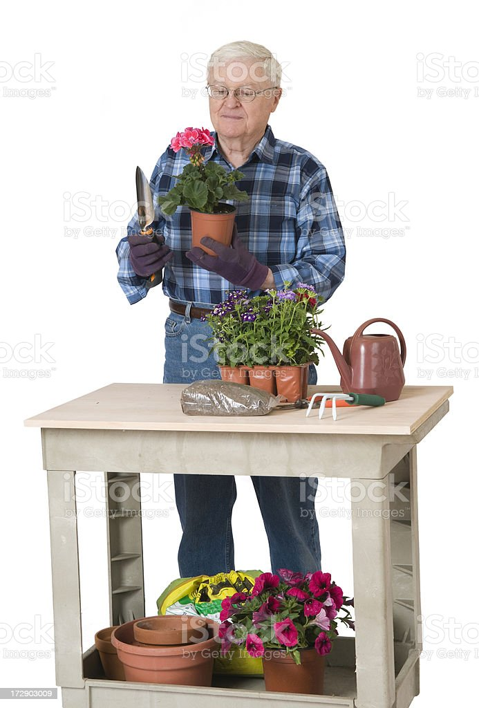 Senior Man Gardening stock photo